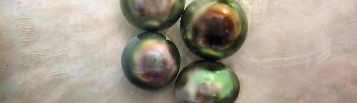 Perles de Tahiti Arthabilis